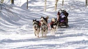 Dog Sledding Tours Whistler